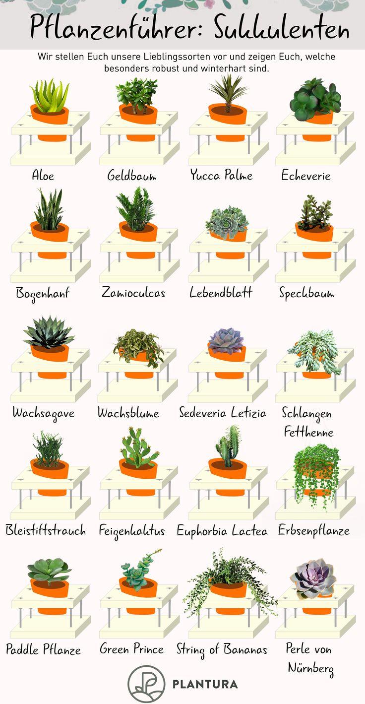 Sukkulentenarten: Die 10 schönsten & winterharten Arten (Übersicht – Plantura | Garten Ideen & Tipps | Gemüse, Obst, Kräuter