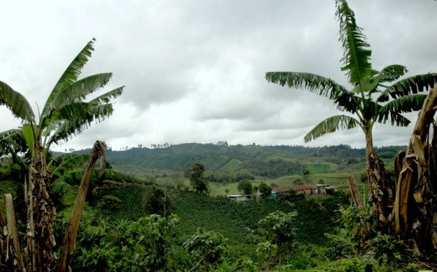 Coffee Region, Salento, Colombia