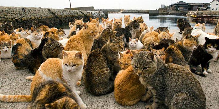 Insula Pisicilor din Japonia