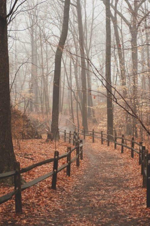 I can almost smell the leaves, the slight chill in the air, feel the mist on my…