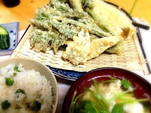 昨日の魚釣りの釣果のキスとハゼも仲間入り、山菜は竹の子、こごみ、ワラビ、たらの芽、葉人参です。豆御飯と春セリの卵とじ汁も付けました。春満開。 - 58件のもぐもぐ - 主人と私の晩御飯 春の山菜の天ぷら by shinnriko