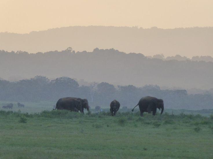 Haputale, Uvaprovinsen, Sri Lanka. Medlem: Zennors