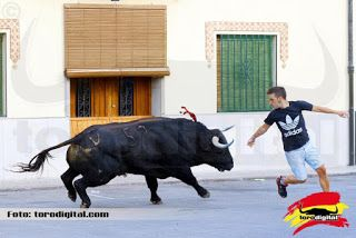 torodigital: Arrancan los festejos taurinos en la población ca...