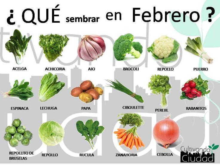 ¿Qué sembrar en febrero?
