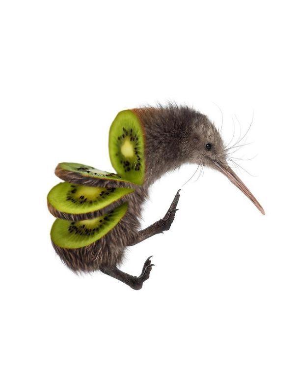 Animal Food: des hybrides animaux végétaux   animal food hybrides animaux vegetaux mash up kiwi
