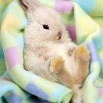 Vegan (No Animal-Testing, No Animal By-products) Shampoo List