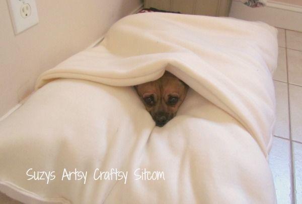 """Make a Cool """"Envelope"""" Dog Bed!"""