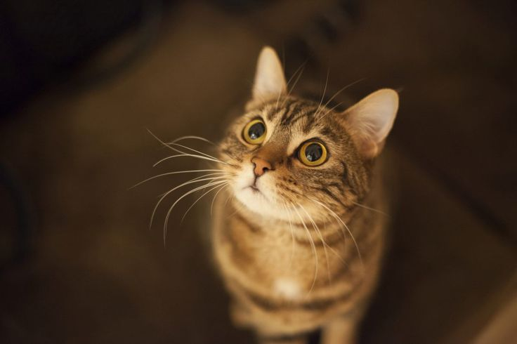 Jak wybrać psa lub kota dla alergika - radzi mówi dr Dorota Sumińska, weterynarz, autorka książek o zachowaniach zwierząt.