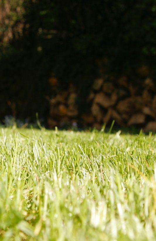 Die besten 25+ Rasen düngen Ideen auf Pinterest Rasenunkraut - unkraut im rasen