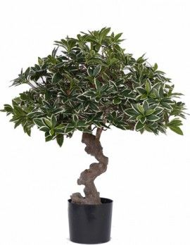 best 25 bonsai ficus ideas on pinterest ficus bonsai tree bonsai and large bonsai tree. Black Bedroom Furniture Sets. Home Design Ideas