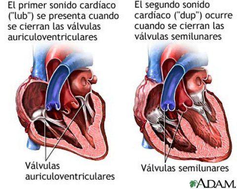La sangre que recorre el cuerpo se bombea a los pulmones,se oxigena, se bombea a través de las arterias al resto del cuerpo, y una vez utilizado el oxígeno,vuelve al corazón a través de las venas y comienza su ciclo nuevamente: se bombea a los pulmones para que se vuelva a oxigenar. Escalas de los soplos:  Los soplos cardíacos se clasifican en una escala de 1 a 6.