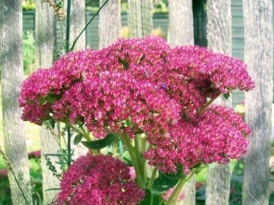 Plantas resistentes à seca para uma paisagem - jardinagem sabe