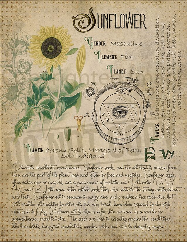 sunflower   nature magick   Witch herbs, Book of shadows, Herbal magic
