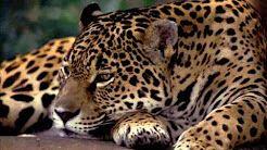 bioma floresta amazonica - YouTube