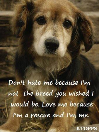 Don't hate them...love them with all your heart. Homeless is not necessary!!