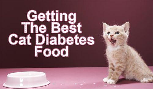 Getting The Best Cat Diabetes Food #diabetic_cat_food #cat_diabetes_food