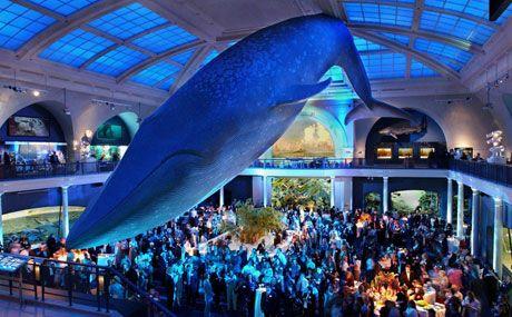 American Museum of Natural History, NY