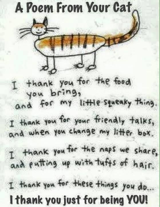 Poem From Your Cat