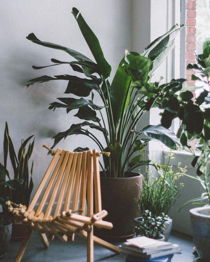98 Best Images About Jardin D'intÉrieur // Botanic Auf Pinterest ... Wintergarten Gestalten Welche Pflanzen Kommen Rein