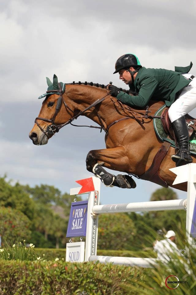 Cian O Connor and KEC Alligator Alley  Fed on www.seahorseatlantic.com Horse supplement #horse #pony #supplement #healthy #pet