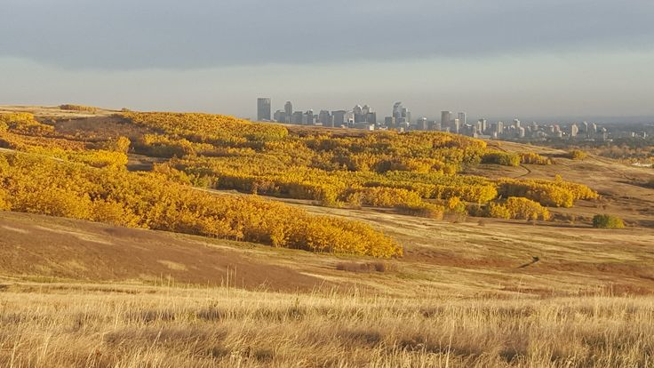 Beautiful fall colours in Nose Hill Park in northwest Calgary, Alberta, Sept 2015