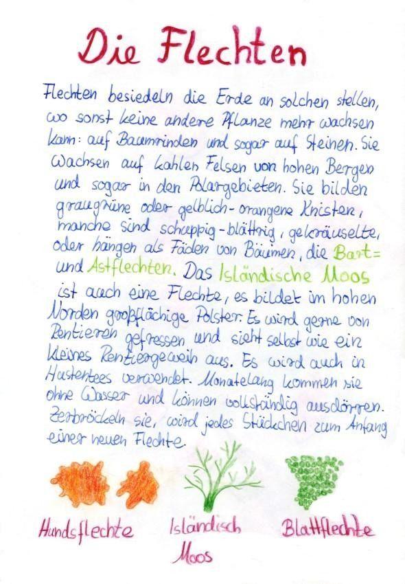 Epochenheft Zur Pflanzenkunde An Der Waldorfschule Von Linnea In 2020 Mit Bildern Waldorf Schule Pflanzenkunde Schule