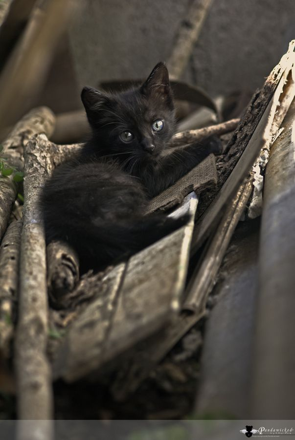 Cute Kitten Poses Cat Photo <a href=
