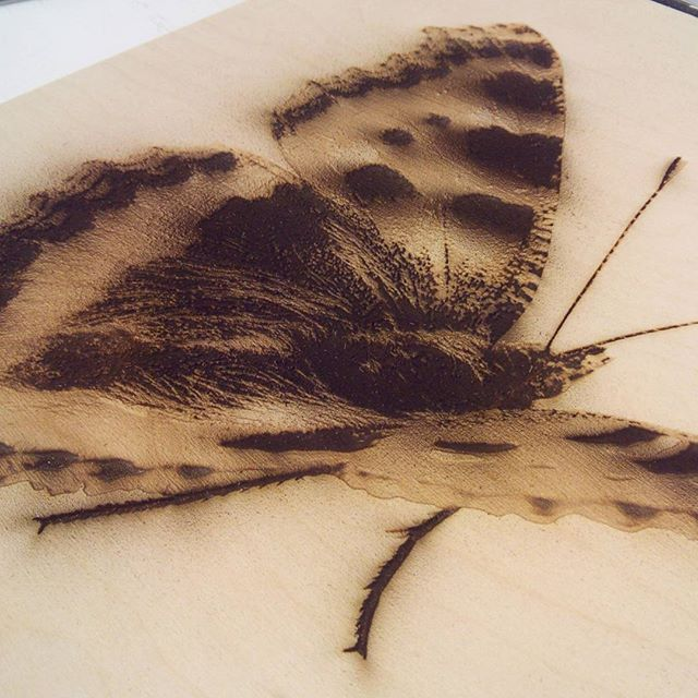 Another butterfly fresh off the laser. This time on 12mm plywood #lasercutting #laserengraved #butterfly #jensheehan #raster #image #plywood #wood