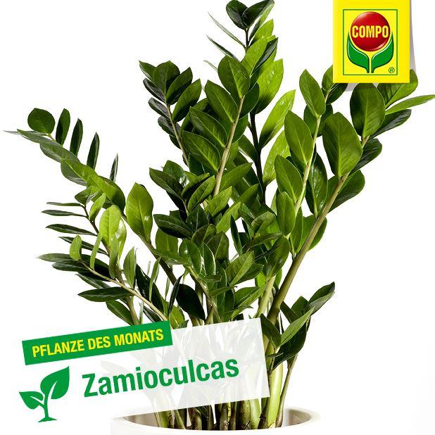 25 einzigartige tropische pflanzen ideen auf pinterest gr ne bl tter tropische. Black Bedroom Furniture Sets. Home Design Ideas