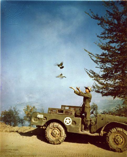 World War I Centennial: Recalling the Messenger | Mental Floss |Wwi Messenger