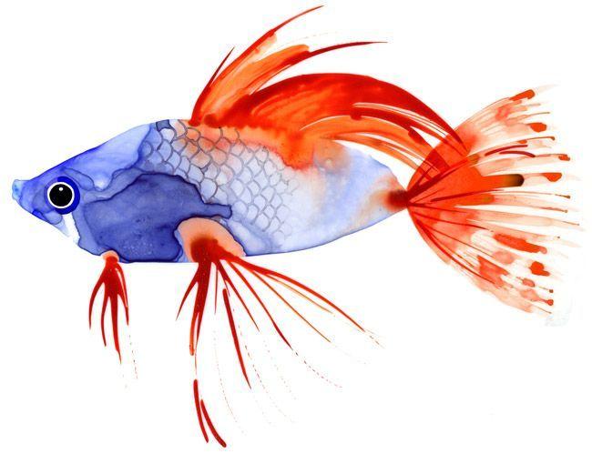 margaret berg art | Margaret Berg : summer / nautical / fish This would be so sweet carved ...