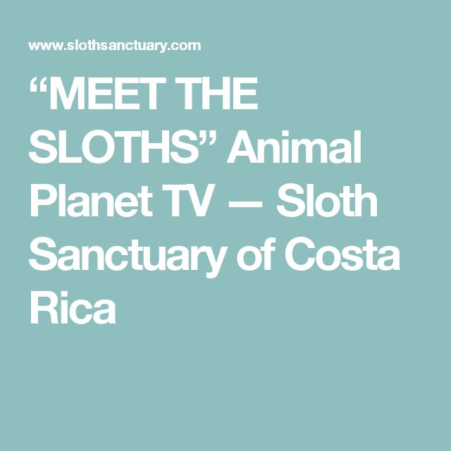 """MEET THE SLOTHS"" Animal Planet TV — Sloth Sanctuary of Costa Rica"