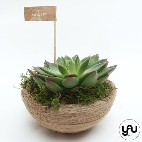 MARTURII plante suculente in suport sferic SFOARA - M7 - https://www.yau.ro/collections/marturii-nunta-si-botez?page=1 - yauconcept - elenatoader