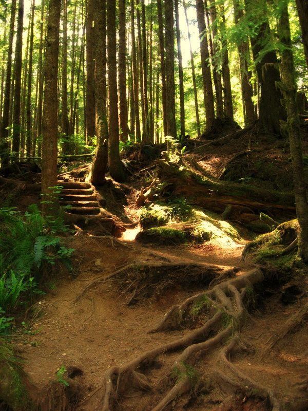 part of the Juan de Fuca trail on the West coast of Vancouver Island