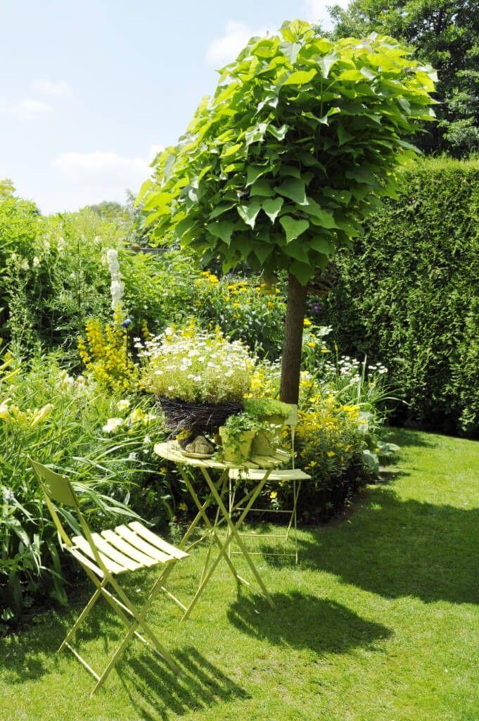 17 Meilleures Idées à Propos De Bäume Für Den Garten Sur Pinterest ... Baum Fur Den Garten Outdoor Bereich Perfekt Geeignet
