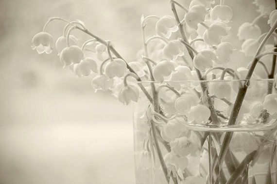 Sepia Still Life Print Lily of the Valley  Fine Art  - on etsy by JudyStalus, 17.00