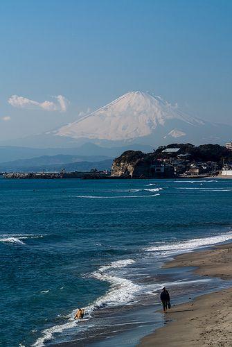 Dog walking on the beach #japan #kanagawa #kamakura