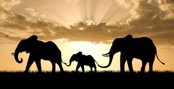 africa: Africans Elephants, Buckets Lists, Africans Safari, Africa Africa, Families, Riding An Elephants, Elephants Love, Africa Travel, Animal