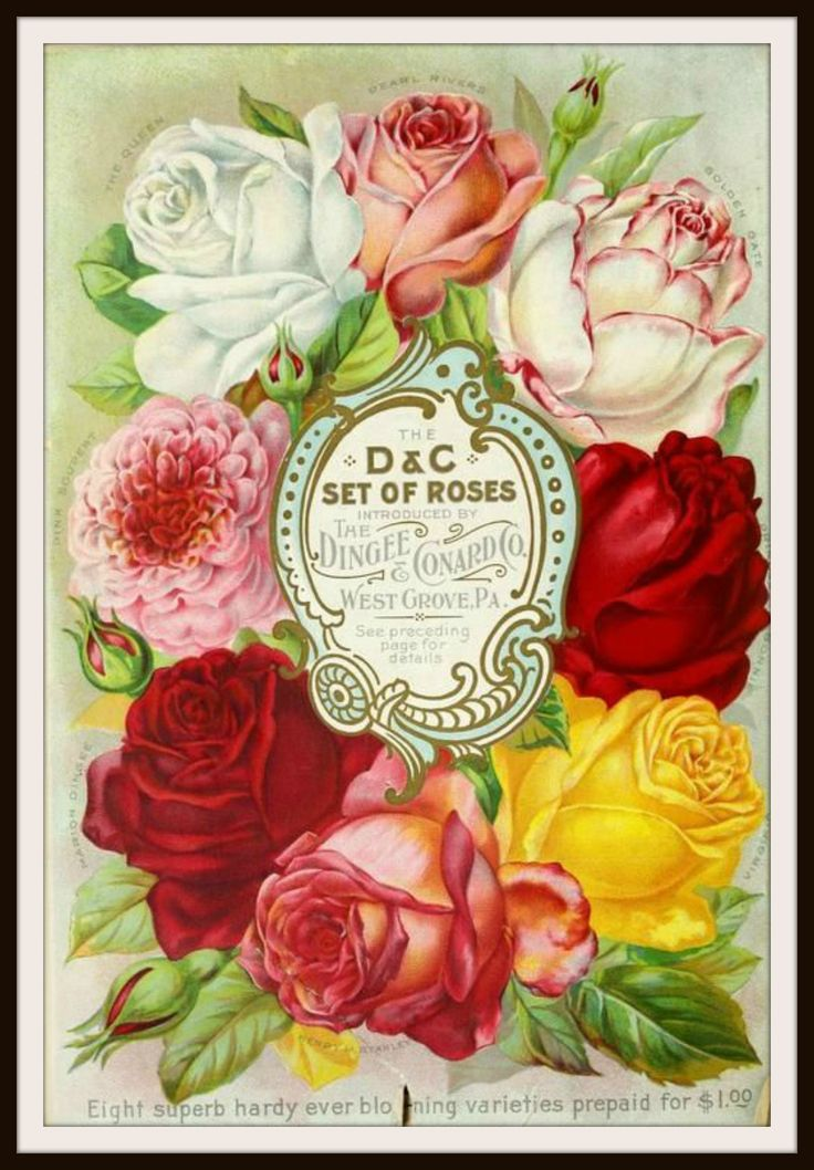 Vintage Reproduction Seed Pack Cover Art Print Beautiful
