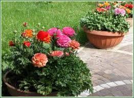 Картинки по запросу вазоны с многолетними цветами