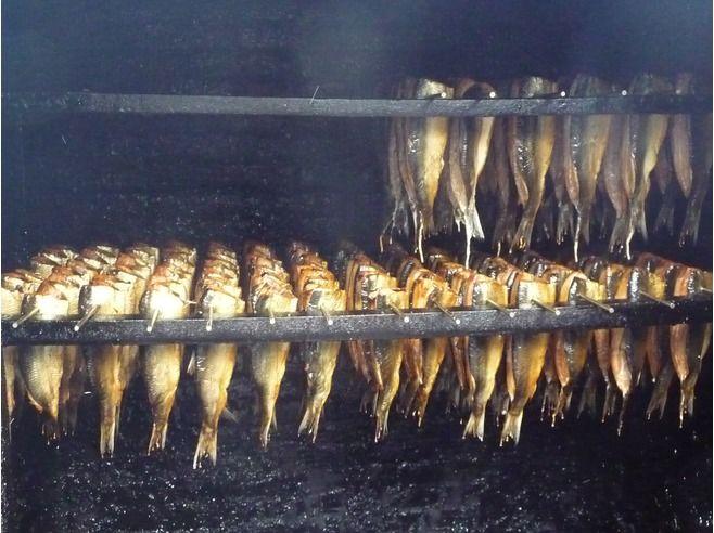 Smoking herring at Zuiderzeemuseum, Enkhuizen