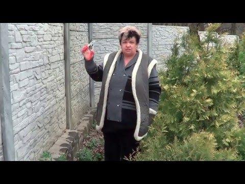 Розы. Весенняя Обрезка Роз. Как Обрезать Розы - YouTube