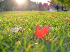 Benefits of fall core aeration for the lawn | ACES News :: College of ACES…