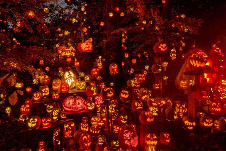 Tons of Jack-o-lanterns Jack-O-Lantern Spectacular Louisville, KY