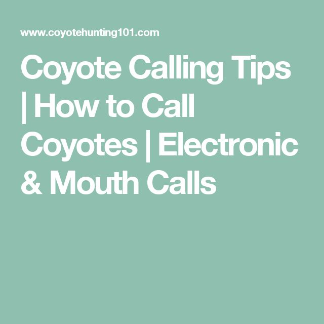Coyote Calling Tips | How to Call Coyotes | Electronic & Mouth Calls