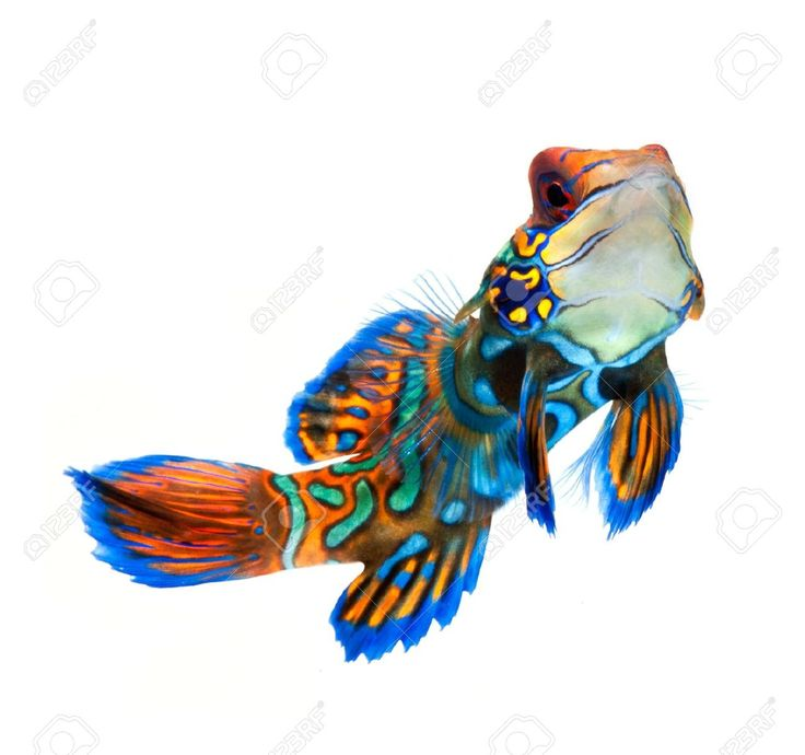 Goby Fish Stock Photos & Pictures. Royalty Free Goby Fish Images ...