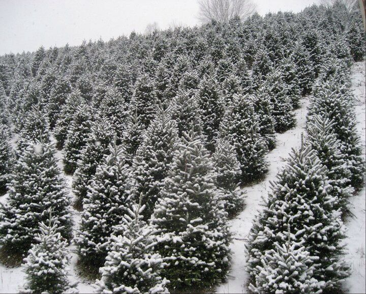41 Best Werner Christmas Tree Farm Images On Pinterest