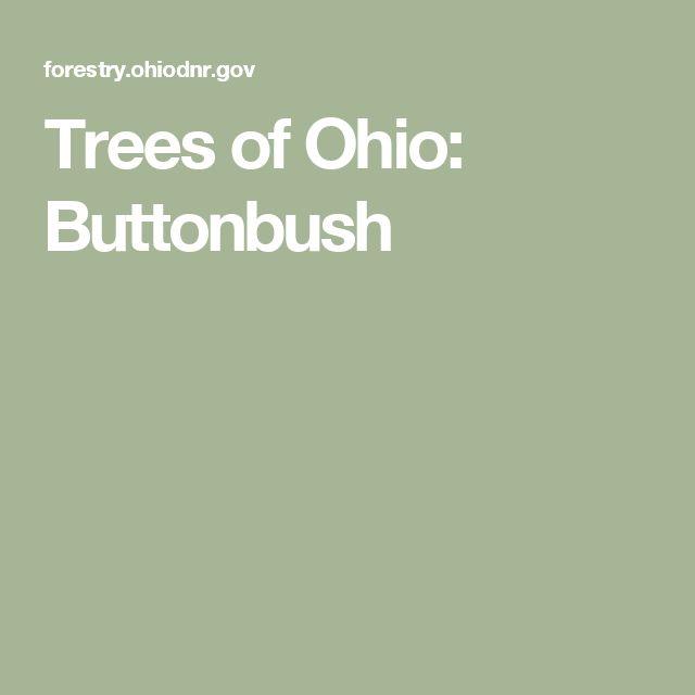 Trees of Ohio: Buttonbush