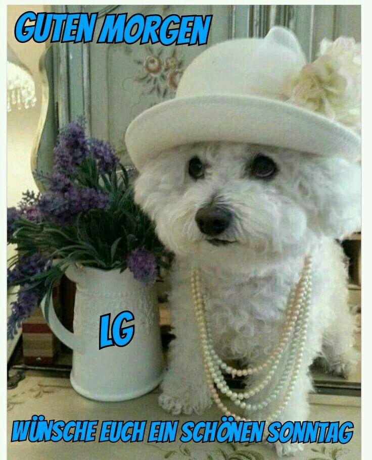 Die besten 25+ Malteser kaufen Ideen auf Pinterest   Malteser hund ...