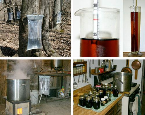 how to start making maple syrup